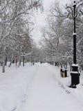Parco di Snowy fotografie stock libere da diritti