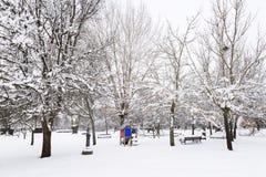 Parco di Snowy con le oscillazioni e gli alberi immagine stock libera da diritti