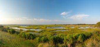 Parco di stato di Assateague, isola dei cavalli selvaggii in Maryland, marzo e spiaggia immagine stock libera da diritti