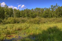 Parco di stato di Bemidji sul lago Bemidji immagini stock libere da diritti