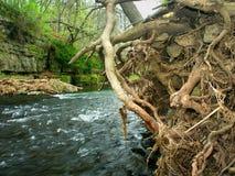 Parco di stato del canyon del fiume di Apple Illinois Immagini Stock