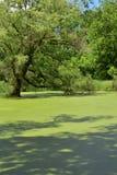 Parco di stato del picco di Lapham in Delafield Wisconsin fotografie stock libere da diritti