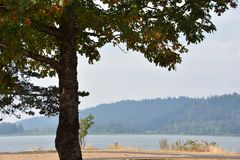 Parco di stato della roccia del gallo nell'Oregon fotografia stock libera da diritti