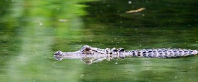 Parco di stato delle primavere della magnolia dell'alligatore Immagini Stock