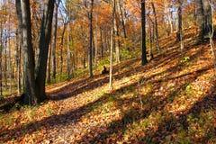 Parco di stato di Kickapoo Illinois Immagini Stock Libere da Diritti