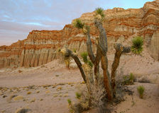 Parco di stato rosso del canyon della roccia Immagini Stock Libere da Diritti