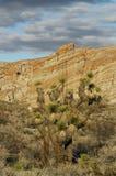 Parco di stato rosso del canyon della roccia Fotografie Stock