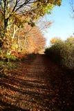 Parco di Tattingstone, Regno Unito, colori delle foglie di autunno Immagini Stock