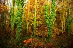 Parco di Tattingstone, Regno Unito, colori delle foglie di autunno Fotografie Stock Libere da Diritti