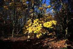 Parco di Tattingstone, Regno Unito, colori delle foglie di autunno Immagini Stock Libere da Diritti