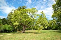Parco di Versailles Immagini Stock Libere da Diritti