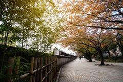 Parco di Yokoamicho in autunno fotografie stock
