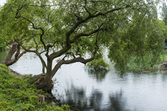 Parco di Ypres nel lago Fotografia Stock