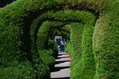 Parco di Zarcero in Alajuela, Costa Rica Fotografia Stock