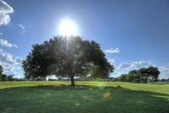 Parco di Zilker, Austin, il Texas Fotografia Stock
