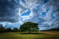 Parco di Zilker, Austin, il Texas con l'albero Fotografia Stock Libera da Diritti