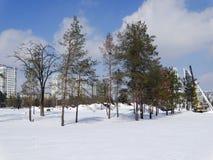 Parco dopo precipitazioni nevose Fotografia Stock