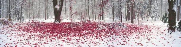Parco dopo una tempesta della neve Fotografie Stock Libere da Diritti