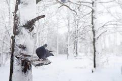 Parco e banchi innevati di inverno Parco e pilastro per alimentarsi Immagini Stock