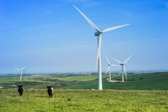 Parco eolico con il pascolo il bestiame e delle turbine Fotografia Stock Libera da Diritti