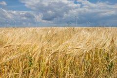 Parco eolico costiero in mezzo ad un giacimento di grano, Botievo, Ucraina Fotografia Stock Libera da Diritti
