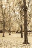 Parco fantastico del paesaggio in autunno fotografie stock libere da diritti