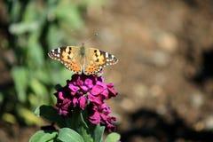 Parco, farfalla, Teheran, Iran Fotografie Stock