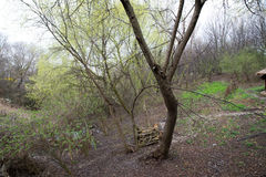 Parco fotografato della molla Fotografie Stock