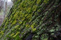 Parco fotografato della molla Immagini Stock Libere da Diritti