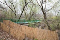 Parco fotografato della molla Immagini Stock