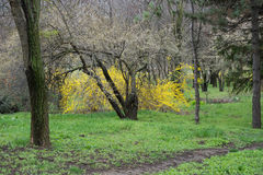 Parco fotografato della molla Fotografia Stock