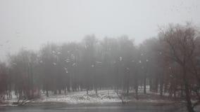 Parco Gatcina di inverno stock footage