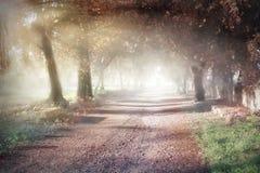 Parco Gussone 免版税图库摄影