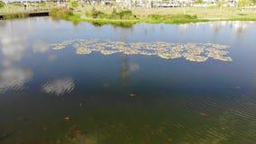 Parco Hadera di Ecko stock footage