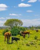 Parco indigeno, Maldonado, Uruguay fotografia stock