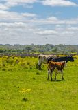 Parco indigeno, Maldonado, Uruguay fotografia stock libera da diritti