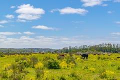 Parco indigeno, Maldonado, Uruguay fotografie stock