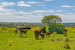 Parco indigeno, Maldonado, Uruguay fotografie stock libere da diritti