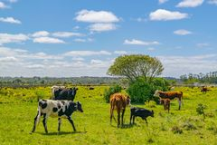 Parco indigeno, Maldonado, Uruguay immagini stock