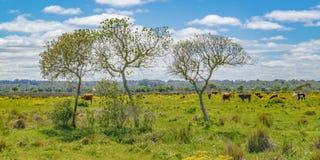 Parco indigeno, Maldonado, Uruguay immagini stock libere da diritti