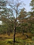 Parco Kinkakuji a Kyoto, Giappone fotografia stock libera da diritti