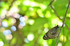 Parco Kuala Lumpur della farfalla Fotografia Stock