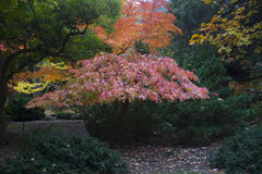 Parco Lithia Ashland, Oregon immagini stock