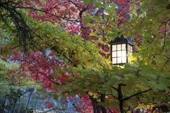 Parco Lithia Ashland, Oregon Immagini Stock Libere da Diritti