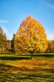 Parco in Marienbad fotografia stock libera da diritti