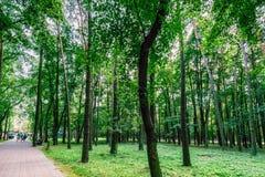 Parco Minsk della città Fotografie Stock