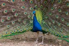 Parco Natura Viva Obrazy Royalty Free