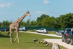 Parco Natura Viva. Is a Safari Park and Zoo near Lazise at Lake Garda where you can do a Safari with your own car royalty free stock photography