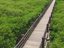 Parco naturale Immagini Stock