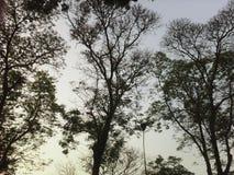 Parco naturale Fotografie Stock